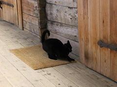 ベルゲンの世界遺産ブリッゲンの黒猫