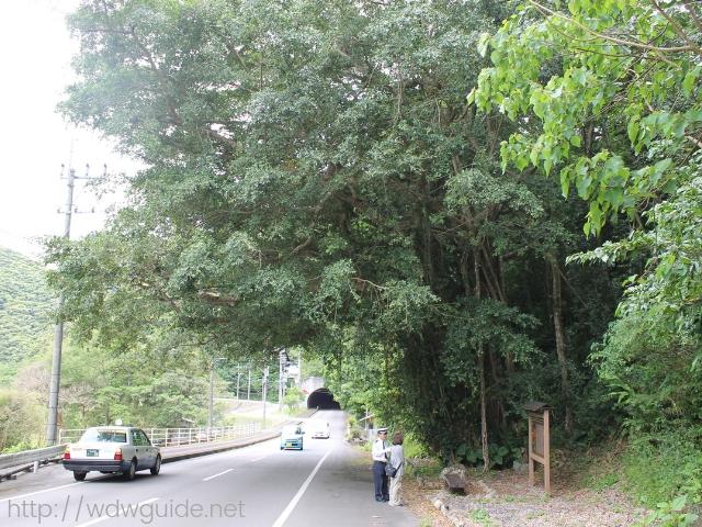 奄美大島の道端