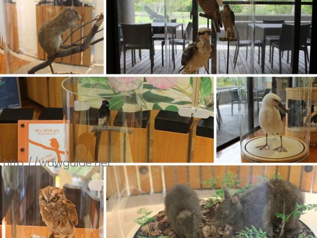奄美野生生物保護センターの展示物