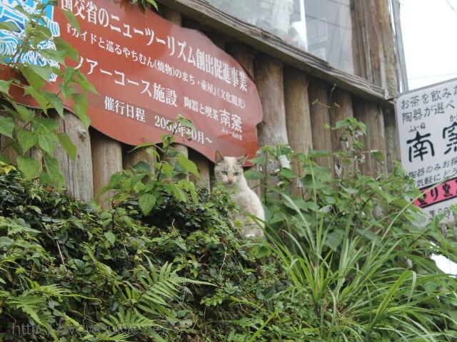 沖縄那覇のやちむん通の猫