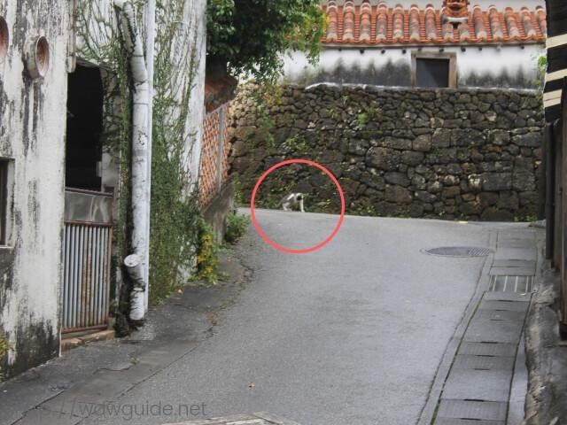 やちむん通りで見つけた猫