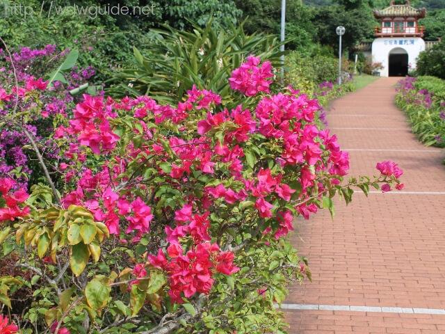 石垣島鍾乳洞への入り口に咲く色鮮やかな花々