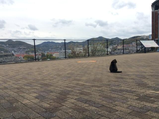 長崎の高台にある広場の猫