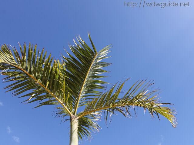 フォートローダーデールの青い空