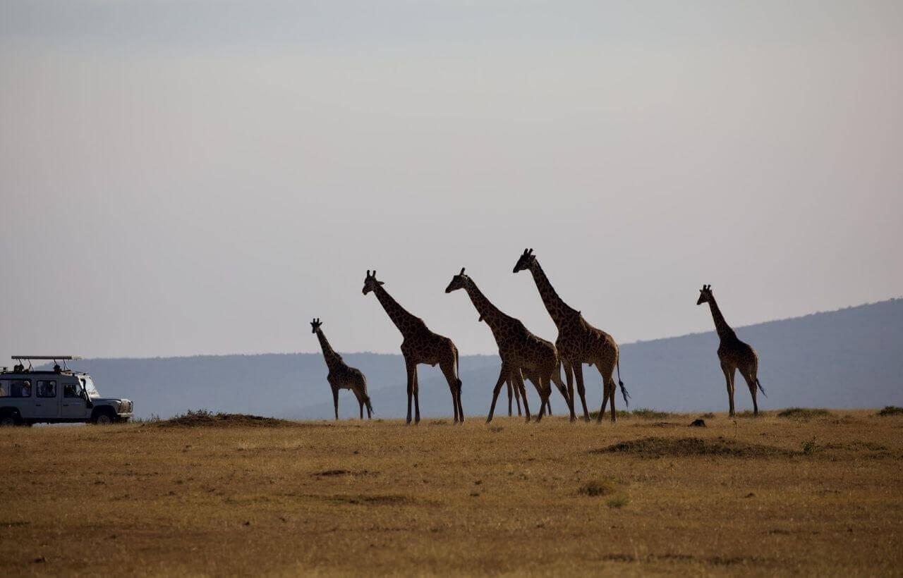 ケニアのサファリツアー