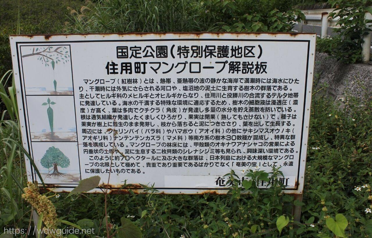 奄美大島のマングローブ[奄美大島旅行記ブログ]