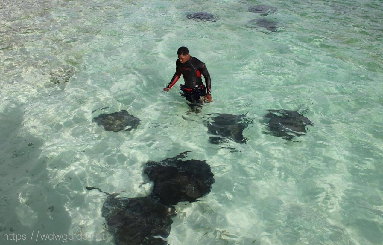 ハーフムーンケイのエイが泳ぐ海