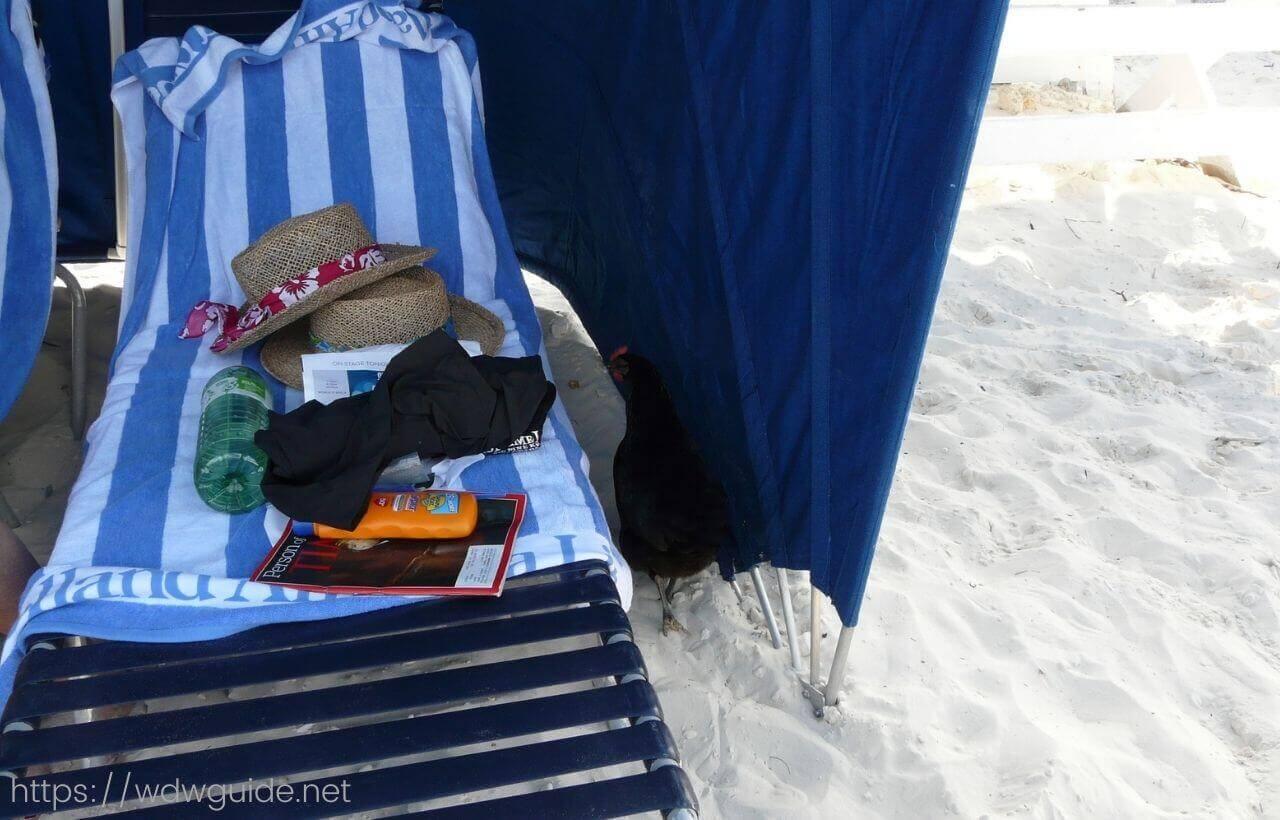 ハーフムーンケイのビーチにあるクラムシェル